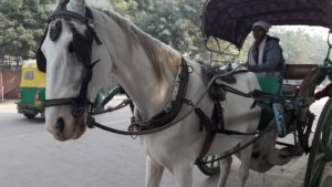 Tonga - a joy ride in Agra